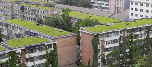 Actual Actual Carmena plantará huertos en las azoteas para reducir la contaminación